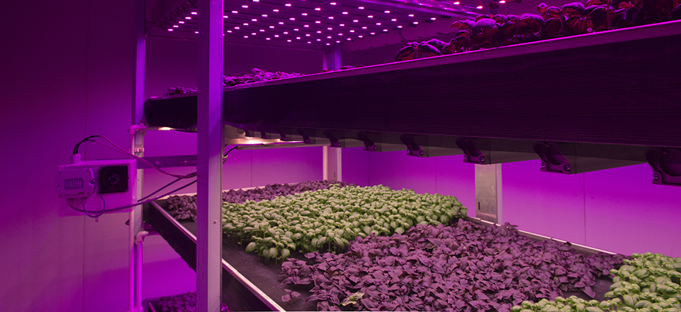 InnovationQuarter en partners ontwikkelen meerjarenstrategie tuinbouw in Arabische Emiraten, Qatar en Saoedi-Arabië