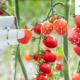 AgriTech opent eerste voucherronde voor innovatie tuinbouw