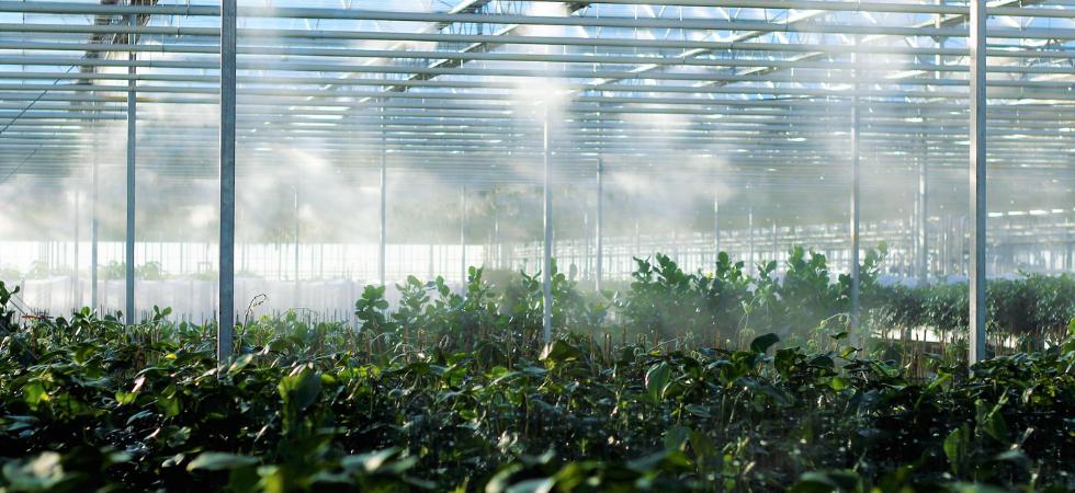 Voucher voor innovatieproject tuinbouw en tech